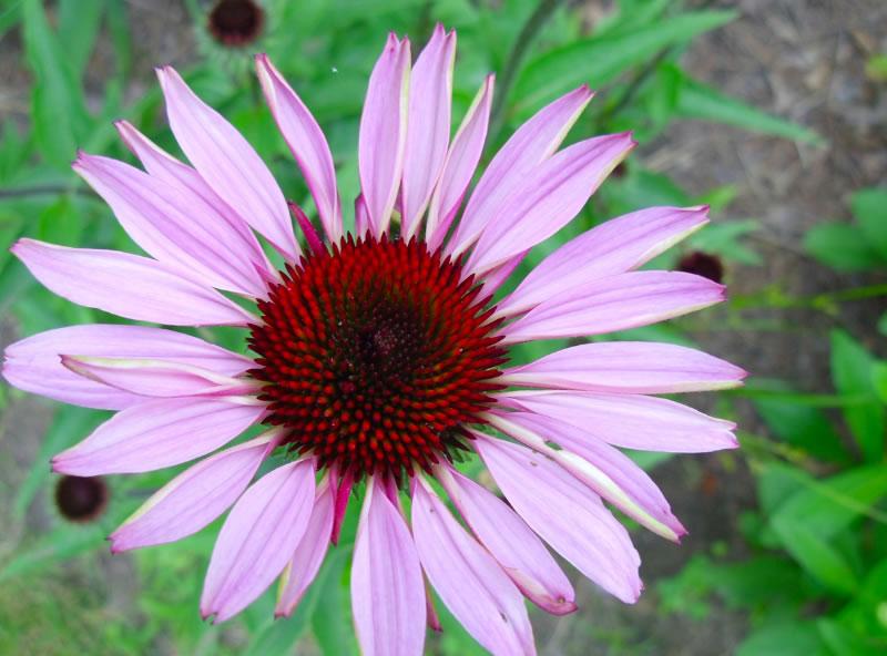 gar-flower1-08-28-2012