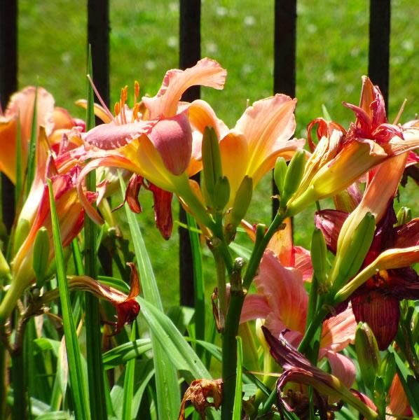 gar-flower2-08-28-2012