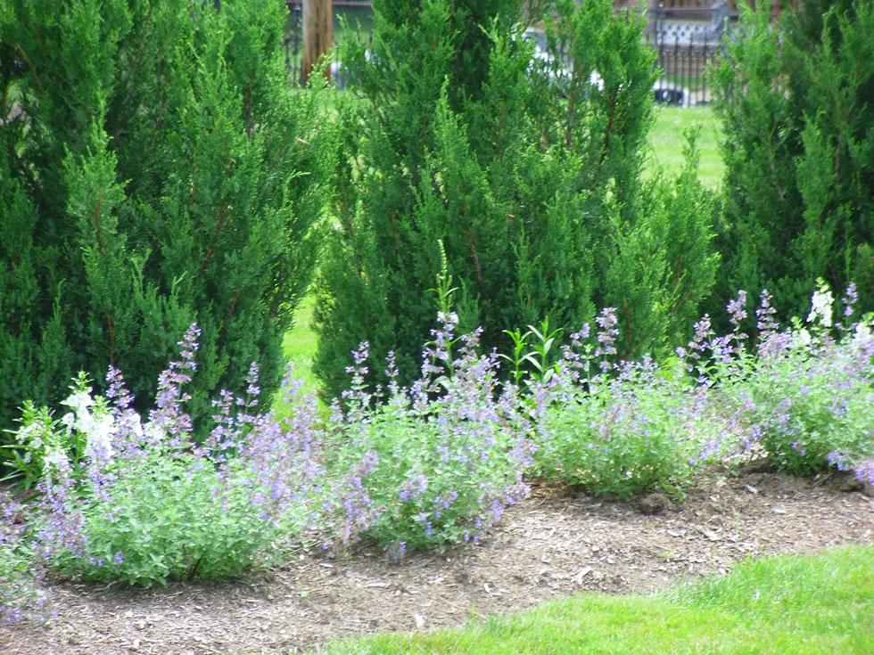 gardens-june-28-2011-006