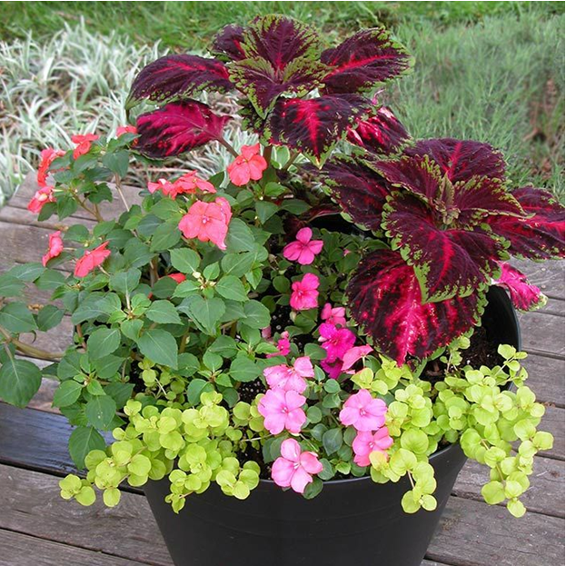 Planting A Container Garden