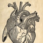 medical sketch of a heart