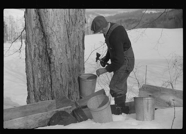 The History Of The New England Maple Sugar Harvest With Dennis Picard