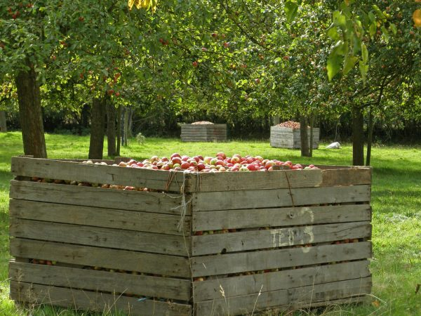 Cider History With Dennis Picard: A Drink When We Want It And A Cup For A Thirsty Traveler